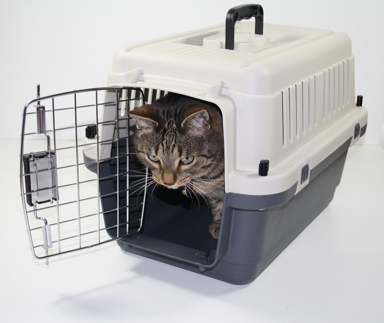 cat xpress transportbox katzenbox hundebox. Black Bedroom Furniture Sets. Home Design Ideas